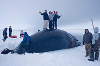 young Inupiat kids stand upon a bowhead whale, Balaena mysticetus, caatch at the edge of a lead, frozen Chukchi Sea, off Point Barrow, Arctic Alaska