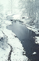 Family of cows crossing creek in winter