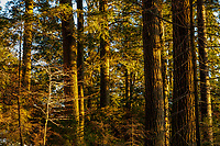 Last light in the Ferris Lake Wild Forest Area in the Adirondack Mpuntains of New York State
