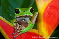 Amphibians
