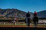 ARCADIA, CA - NOV 02: Madam Dancealot, owned by Nick Cosato and trained by Richard Baltas, exercises in preparation for the Breeders' Cup Juvenile Fillies Turf at Santa Anita Park on November 2, 2016 in Arcadia, California. (Photo by Scott Serio/Eclipse Sportswire/Breeders Cup)
