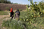 8 June 2013, Mazar-i-Sharif, Balkh Province, Afghanistan. Local woman Khanum Gul (right) inspects her tomato plants with Noorzia Siddiqi her Crop Officer  at her small plot - or kitchen garden - on her family property in Mazar-i-Sharif.  She is cultivating eggplants , corn, radish and tomato. Khanum is a beneficiary of the new National Horticulture and Livestock Project (NHLP) that is providing seedlings , fertiliser and technical help to beneficiaries.  The NHLP is providing training and equipment to farmers to assist in increasing production and to improve management of lands and animals. Picture by Graham Crouch/World Bank