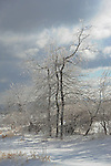 Glistening Ice Covered Branches in a Snowy Hilltop Pasture on a Cold Winter Day in New Hampshire
