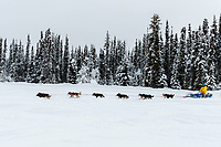 Sarah Stokey is on the trail with fresh snow on trees after leaving the Kaltag checkpoint on Monday morning March 11th during the 2019 Iditarod Trail Sled Dog Race.<br /> <br /> Photo by Jeff Schultz/  (C) 2019  ALL RIGHTS RESERVED