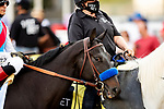 MAY 15, 2021: Medina Spirit before the Preakness Stakes at Pimlico Racecourse in Baltimore, Maryland on May 15, 2021. EversEclipse Sportswire/CSM