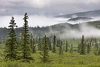 Morning fog over the taiga and tundra of Denali National Park, Interior, Alaska.