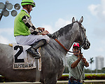 HALLANDALE BEACH, FL - JANUARY 01:   <br /> Scenes from Gulfstream Park. Squadron A with Corey Lanerie up after winning the G3 Mr Prospector Stakes at Gulfstream Park. (Photo by Arron Haggart/Eclipse Sportswire/Getty Images
