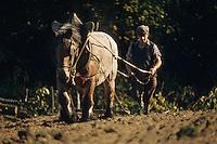 Europe/France/Limousin/23/Creuse/Jarnages: Travaux des champs, hersage avec Jument à Domeyrot<br /> PHOTO D'ARCHIVES // ARCHIVAL IMAGES<br /> FRANCE 1980