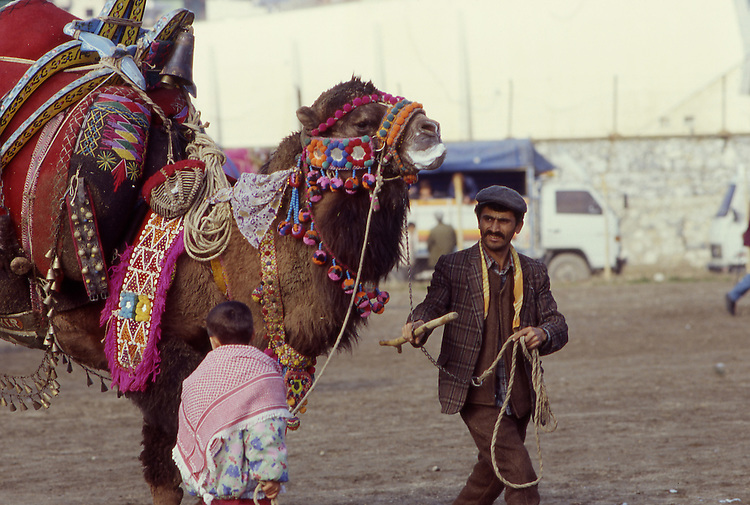 Asia, TUR, Turkey, Aegean Coast, Aegean, Soke, Camelfighter with Camel