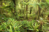 native forest | New Zealand