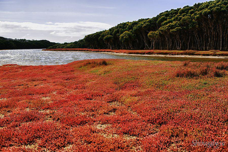 Image Ref: CA073<br /> Location: Antechamber Bay, Kangaroo Island<br /> Date: 20th April 2014