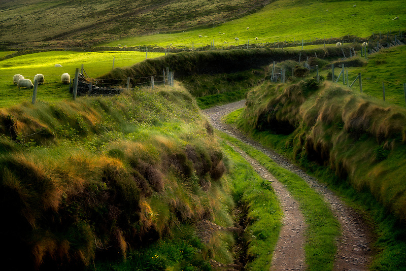 Side road off of Slea Head Drive. with sheep. County Kerry, Ireland