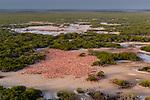 American Flamingo (Phoenicopterus ruber) nesting colony. Yucatan, Mexico.