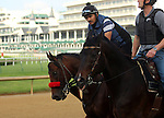 LOUISVILLE, KY - MAY 02: Nyquist (Uncle Mo x Seeking Gabrielle, by Forestry) is ponied on the track at Churchill Downs, Louisville, Kentucky. Owner Reddam Racing LLC, trainer Doug F. O'Neill. (Photo by Mary M. Meek/Eclipse Sportswire/Getty Images)