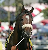 Historical horses for Joe