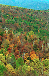 Skyline drive autumn leaves Commonwealth of Virginia, Fine Art Photography by Ron Bennett, Fine Art, Fine Art photography, Art Photography, Copyright RonBennettPhotography.com ©