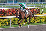 14 February 2010: Khancord Kid with Rajiv Maragh in the Coconut Grove Stakes at Gulfstream Park in Hallandale Beach, FL.