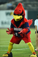 Memphis Redbirds mascot Rocky Redbird during a game against the Oklahoma City RedHawks on May 23, 2014 at AutoZone Park in Memphis, Tennessee.  Oklahoma City defeated Memphis 12-10.  (Mike Janes/Four Seam Images)