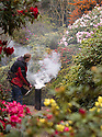 "02/04/19<br /> <br /> Hoping for a truly vintage year in his garden, Pete Tye, 49, uses smoke to protect his rhododendrons and azaleas from a forecast frost at Lea Gardens, near Matlock, Derbyshire.  <br /> <br /> With freezing temperatures and snow predicted, Pete said: ""In French vineyards they use smoke to move the air around to stop frost damage so we thought we'd give it a go here too. It's impossible to protect the whole four-and-a-half acre garden, but I want to try and save the main areas of early colour and buds if I can. I'll be keeping my eye on the temperature and will be out here with my smoker in my pyjamas at dawn again over the next few mornings if I need to.""<br /> <br /> Pete is using a home-made chiminea and burning last year's leaves to create the smoke.<br /> <br /> All Rights Reserved, F Stop Press Ltd +44 (0)7765 242650  www.fstoppress.com rod@fstoppress.com"