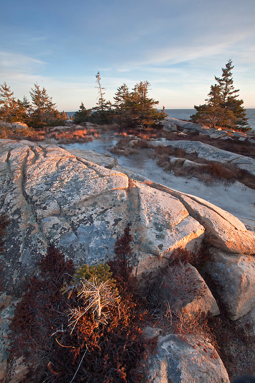 Spruce and crowberry grow among the granite rocks at Schoodic Point on the Schoodic Peninsula in Acadia National Park, Maine, USA