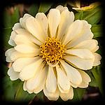 7.4.13 - White Flower...