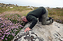 THE ISLES OF SCILLY SEABIRD RECOVERY PROJECT. PETER EXLEY, RSPB, MAKING A MANX SHEARWATER COUNT BY PLAYING A RECORDING OF THEIR CALL INTO THEIR BURROWS.  17/06/2015. PHOTOGRAPHER CLARE KENDALL.