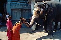 Indien, Kanchipuram (Tamil Nadu), Kamakshi Amman Tempel, Elefant segnet Besucher