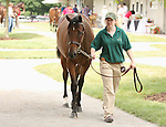 13 July 2010.  Hip #275 Dixie Union - Love Locket filly.