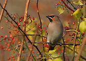 Carl, ANIMALS, wildlife, photos(SWLA2152,#A#)