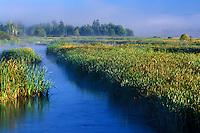 Estuary lagoon, Spencer Island, Everett, Snohomish River Estuary, Washingto