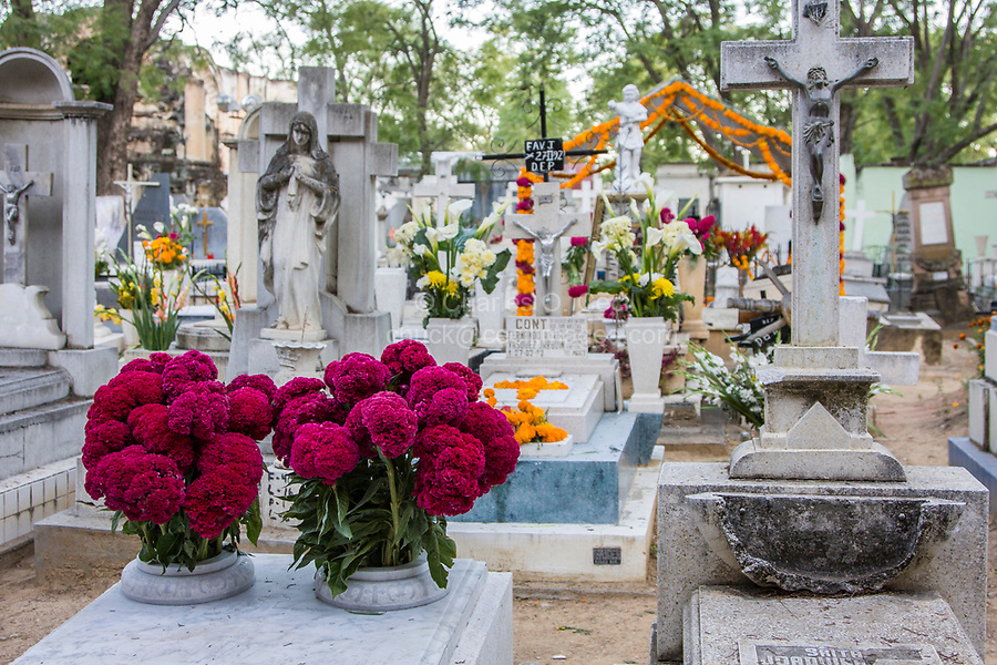 Oaxaca; Mexico; North America.  Day of the Dead Celebration.  Decorated Graves, San Miguel Cemetery.