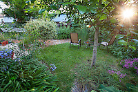 """Sun shining through white alder tree on small lawn, """"Barefoot Lawn"""" with chairs in small space water-wise back yard garden, Richmond California"""