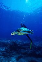 Scuba divers swim along side a green sea turtle in Hawaii's pristine waters
