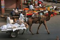 Asie/Inde/Rajasthan/Jaipur: Attelage avec dromadaire prés porte Tripolia se rendant au marché prés porte Tripolia