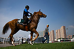 SHA TIN,HONG KONG-APRIL 29: Neorealism,trained by Noriyuki Hori,prepares for  the Audemars Piguet QEII Cup at Sha Tin Racecourse on April 29,2017 in Sha Tin,New Territories,Hong Kong (Photo by Kaz Ishida/Eclipse Sportswire/Getty Images)