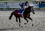 January 24, 2020: True Timber gallops as horses prepare for the Pegasus World Cup Invitational at Gulfstream Park Race Track in Hallandale Beach, Florida. John Voorhees/Eclipse Sportswire/CSM