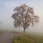 Europa, DEU, Deutschland, Rheinland Pfalz, Naturpark Saar-Hunsrueck, Typische Landschaft, Morgenstimmung, Nebel, Nebelschwaden, Dunst, Baum, Birnenbaum, Blauer Himmel, Weg, Pfad, Kategorien und Themen, Natur, Umwelt, Landschaft, Jahreszeiten, Stimmungen, Landschaftsfotografie, Landschaften, Landschaftsphoto, Landschaftsphotographie, Naturschutz, Naturschutzgebiete, Landschaftsschutz, Biotop, Biotope, Landschaftsschutzgebiete, Landschaftsschutzgebiet, Oekologie, Oekologisch, Typisch, Landschaftstypisch, Landschaftspflege<br /> <br /> [Fuer die Nutzung gelten die jeweils gueltigen Allgemeinen Liefer-und Geschaeftsbedingungen. Nutzung nur gegen Verwendungsmeldung und Nachweis. Download der AGB unter http://www.image-box.com oder werden auf Anfrage zugesendet. Freigabe ist vorher erforderlich. Jede Nutzung des Fotos ist honorarpflichtig gemaess derzeit gueltiger MFM Liste - Kontakt, Uwe Schmid-Fotografie, Duisburg, Tel. (+49).2065.677997, <br /> archiv@image-box.com, www.image-box.com]