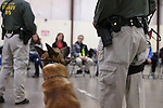 K-9 Ary keeps an eye on his partner, Carson City Sheriff's Deputy Jimmy Surratt, during K-9 demonstrations for a group of GATE students from Carson Middle and Eagle Valley Middle schools, on Wednesday, March 5, 2014 at Fuji Park.<br /> Photo by Cathleen Allison/Nevada Photo Source