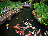 Koi and iris beds path. Japanese Gardens, Oregon