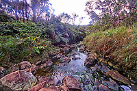 Kawaikoi Stream, where the Alaka'i Swamp Trail crosses over it on the way to the Kilohana Lookout, Kaua'i.