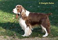 SH25-831z  English Springer Spaniel