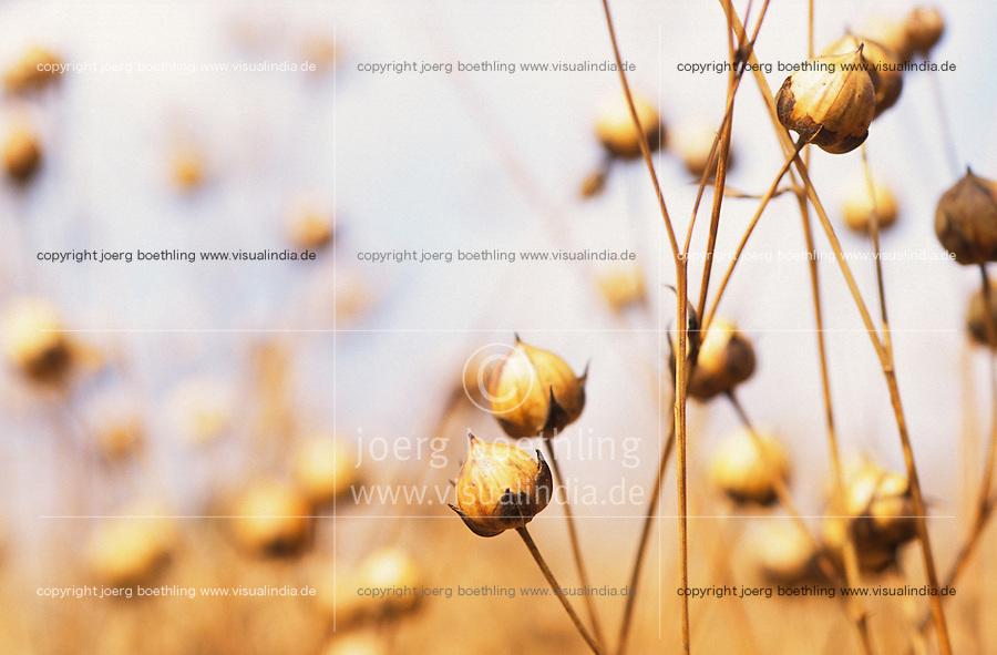 "Europa Deutschland DEU .Ölleinen Flachsfeld in Mecklenburg - Landwirtschaft Agrar Feldbau Pflanzen Energiepflanzen Samen Leinsamen Biomasse Nutzflachs Flachs Flax Leinen Lein Faserlein Faserleinen Flachspflanze Pflanze Ackerbau Landbau Anbau Feld Felder Acker Boden ernten reif Faser Fasern Faserpflanze Faserpflanzen Flachsfaser Faserflachs Naturtextil Naturtextilien Ökokleidung ökologisch Ökologie Ökolandwirtschaft Biolandwirtschaft Faser Fasern anbauen Subvention subventioniert Agrarsubventionen Subventionen Nachwachsende Rohstoffe nachwachsender Rohstoff Ackerfrucht Biomasse Flachsernte alternative Energie Energiewirt Landwirt Bauer Bauern Öllein Leinöl Leinentextilien Pflanzenöl Leinöl Ölsaat Ölpfnzen Pflanzenöl Leinenkleidung Kleidung Ökoleinen xagndaz   .Europe Germany .flax plant for use of vegetable oil and fibre  - agriculture farming soil renewables energy renewable resources resource biomass .   [copyright  (c) agenda / Joerg Boethling , Veroeffentlichung nur gegen Honorar und Belegexemplar an / royalties to: agenda PG   Rothestr. 66   D-22765 Hamburg   ph. ++49 40 391 907 14   e-mail: boethling@agenda-fototext.de   www.agenda-fototext.de   Bank: Hamburger Sparkasse BLZ 200 505 50  kto. 1281 120 178   IBAN: DE96 2005 0550 1281 1201 78  BIC: ""HASPDEHH""] [#0,26,121#]"