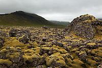Green moss covered Berserkjahraun lava flow, Snaefellsnes peninsula, West Iceland, Iceland