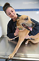 ***FRE PHOTO FOR EDITORIAL USE***<br /> <br /> 23/03/16 <br /> <br /> PDSA Vet Aimee Labbate, owner Sabrina and Sheba the dog at the PDSA Pet Hospital Derby.<br /> <br /> Sheba the crossbreed was rushed in for emergency surgery following an x-ray which showed a fist-sized bladder stone causing havoc for her waterworks.<br /> <br /> For full story please contact Amy Dickin  Dickin.Amy@pdsa.org.uk 01952 797 219.<br /> <br /> All Rights Reserved: F Stop Press Ltd. +44(0)1335 418365   +44 (0)7765 242650 www.fstoppress.com