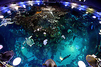 The New England Aquarium in Boston, Mass., is home to the Giant Ocean Tank, which is 23 feet deep, 40 feet wide and holds 200,000 gallons of salt water.