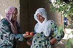 8 June 2013, Mazar-i-Sharif, Balkh Province, Afghanistan. Local woman Sabria Nawabi gifts some of her tomatos and eggplant to her neighbour Fatima Bibi  at her small plot - or kitchen garden - on her family property in Mazar-i-Sharif.  She is cultivating eggplants , corn, radish and tomato. Sabria is a beneficiary of the new National Horticulture and Livestock Project (NHLP) that is providing seedlings , fertiliser and technical help to beneficiaries.  The NHLP is providing training and equipment to farmers to assist in increasing production and to improve management of lands and animals. Picture by Graham Crouch/World Bank