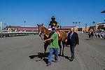 AUG 17,2014:Judy the Beauty,ridden by Mike Smith,wins the Rancho Bernardo Handicap at Del Mar in Del Mar,CA. Kazushi Ishida/ESW/CSM