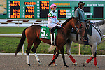 NEW ORLEANS, LA - FEBRUARY 20:<br /> Forevamo #5, ridden by Colby J Hernandez in the Risen Star Stakes post parade for the Louisiana Derby Preview Race Day at Fairgrounds Race Course on February 20,2016 in New Orleans, Louisiana. (Photo by Steve Dalmado/Eclipse Sportswire/Getty Images)