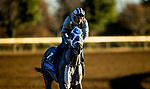 November 4, 2020:  Essential Quality, trained by trainer Brad Cox, exercises in preparation for the Breeders' Cup Juvenile at Keeneland Racetrack in Lexington, Kentucky on November 4, 2020. Alex Evers/Eclipse Sportswire/Breeders Cup