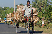 BANGLADESH, transport of Jute fibre by bicycle rickshaw / BANGLADESCH, Transport von Jute Faser mit einer Fahrrad Rikscha